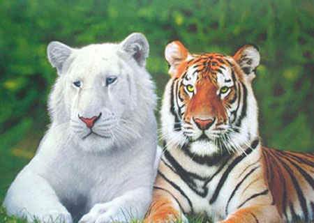 http://www.popartuk.com/g/l/lg3734+brothers-white-tiger-and-bengal-tiger-poster.jpg