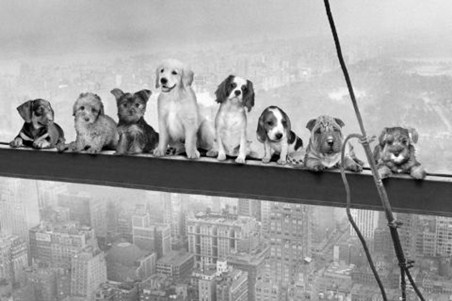 Dogs on a Girder - Men on a Girder Parody