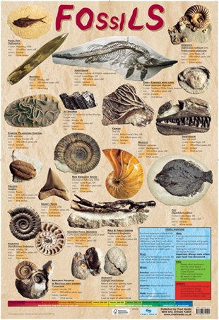 Fossils - Educational Chart