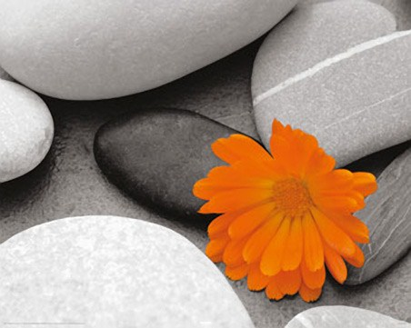 Marigold and Pebbles - Bright Flower amongst Stones