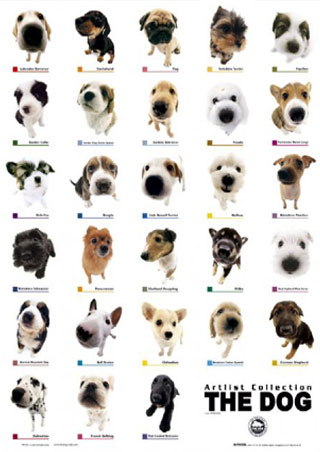 dog breeds of world poster. Puppies II - The Dog