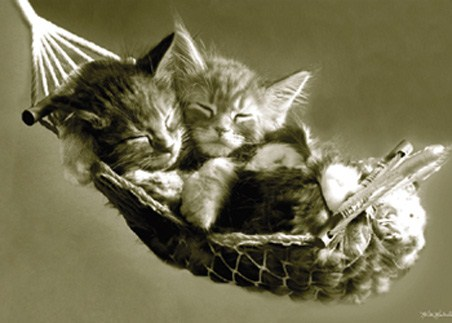 puppies and kittens sleeping. Kittens Asleep in a Hammock