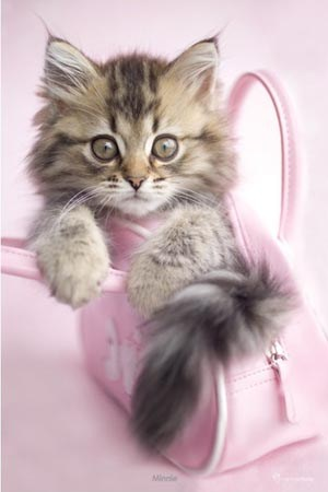 Kitten In A Handbag - Minnie - Rachael Hale