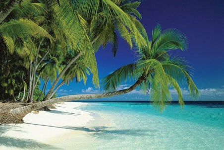 tropical island pictures. a Tropical Island Paradise