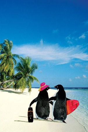 Penguin Paradise - Penguins on Holiday