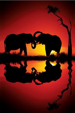 African Dreams - Elephants at Dusk