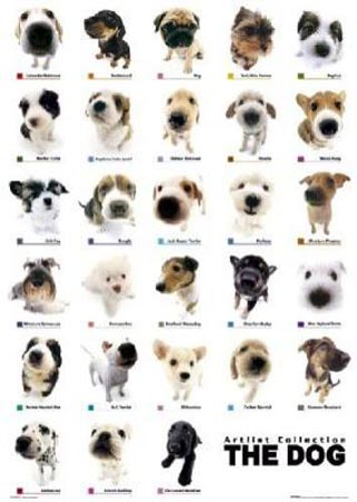dog breeds of world poster. world poster all small dog
