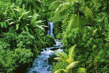 images of plants in rainforest. the Plants - Rainforest