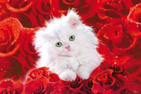 Kitten Hammock Amazingly 20